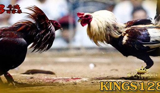 Adu Ayam Pw Filipina Terbaik