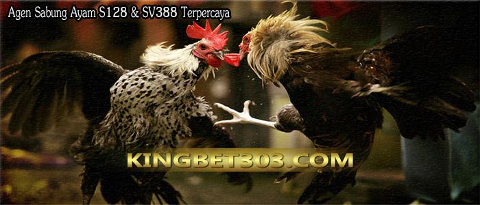 Agen Sabung Ayam Pw Terpercaya Di Indonesia