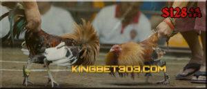 Bandar S128, Tempat Taruhan Adu Ayam Live