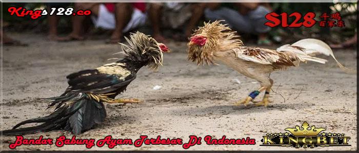 Bandar Sabung Ayam Online Teraman Di indonesia