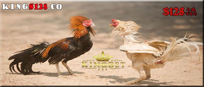 Daftar S128 Sabung Ayam Terbesar Disini