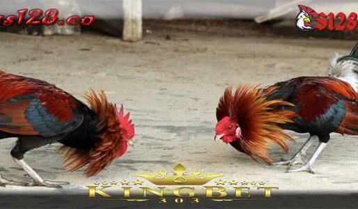 Gaming Sabung Ayam Online S128 Live Teraman