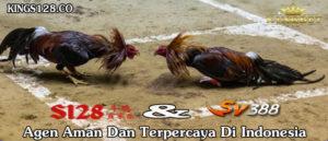 Kings128, Situs Adu Ayam Online Terpercaya