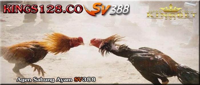 Panduan Bermain Sabung Ayam SV388 Online