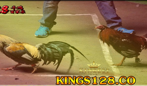 S128 Live Adu Ayam Pisau Filipina
