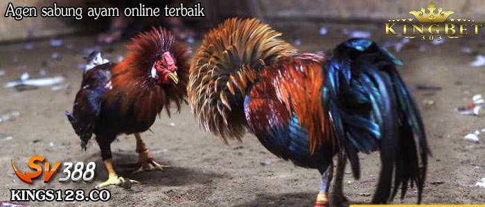 SV388 Sabung Ayam Pilihan Tepat Bermain Judi Online
