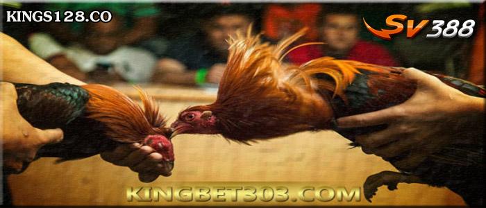 Sabung Ayam SV388 Live Permainan Adu Ayam Online Teraman