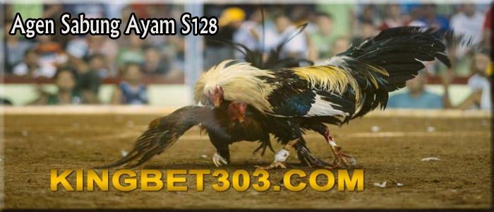 Sejarah Ayam Bangkok S128 Dan Cara Merawatnya