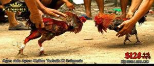 Situs Adu Ayam Online Terbesar Sepanjang Massa