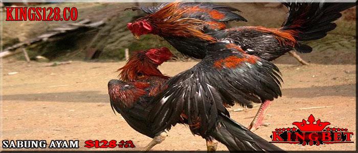 Situs S128, Permainan Sabung Ayam Online Terpopuler Di Asia