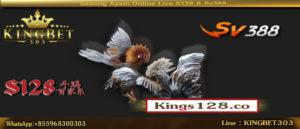Situs Sabung Ayam Terpercaya (S128 & SV388)