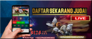 Cara Login S128, Aplikasi Permainan Sabung Ayam Online