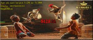 Tips Perawatan Ayam Jago S1288 Sabung Ayam Dengan Baik