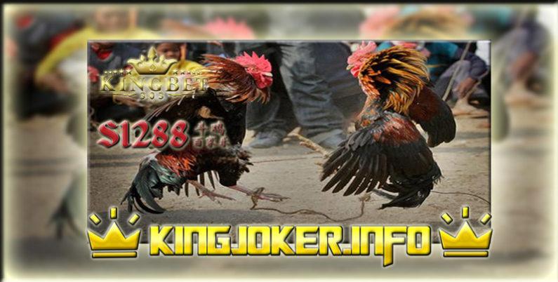 Daftar Situs S1288 Adu Ayam Terbaik, Gak Ribet Adu!
