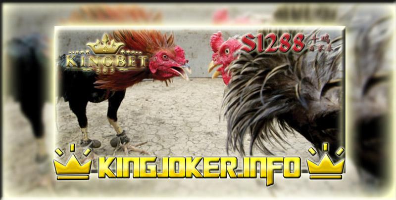 Kenali Supit Belakang Ayam Juara Yang Tepat Di Bandar S1288