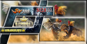 Sabung Ayam S128 Terpercaya Laga Ayam Secara Live, Gratis!