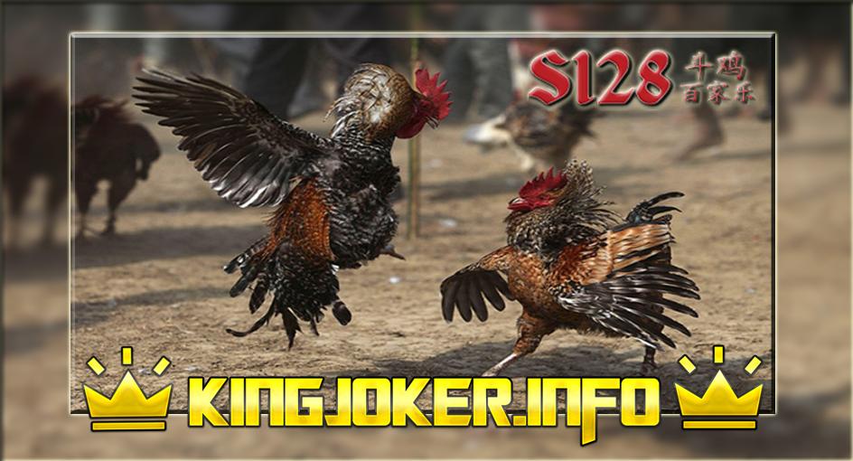 Melatih Sabung Ayam Hingga Dapat Memukul Kuat Di Situs S128