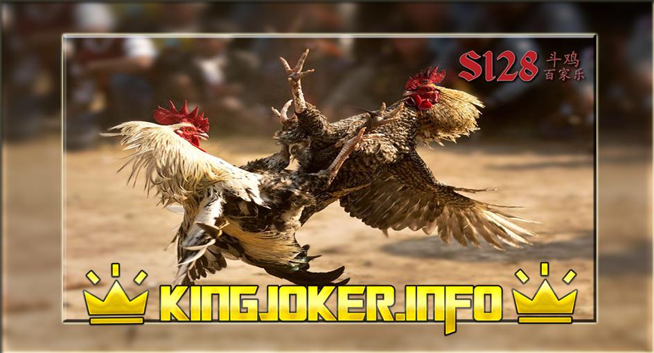 Merawat Ayam Bangkok Yang Benar Agen S128, Selama Ini Salah?