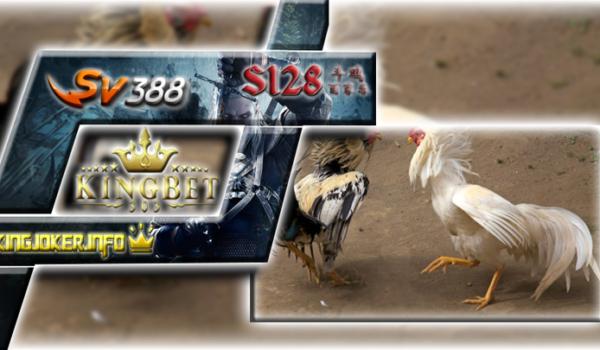 Agen Sabung Ayam Pw S1288 Teraman Jadi Arena Terbaik Beradu