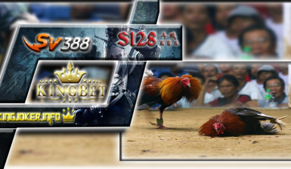 Agen Sv388 Sabung Ayam Lebih Luas Dari Yang Kamu Tahu!