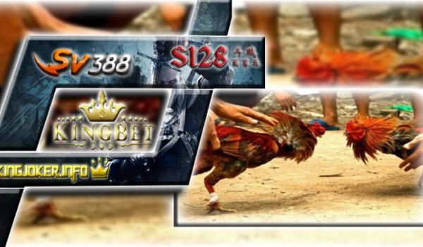 Daftar S1288 Di Agen Ayam Online Terpercaya Dan Ternyaman