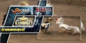 Judi Ayam Sv388 Deposit Murah Bank DANAMON Sabung Ayam