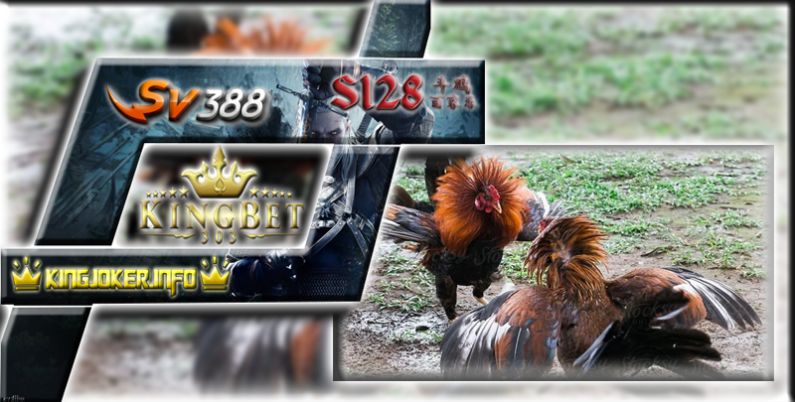 Sabung Ayam Online Sv388 Tempat Bermain Terpopuler Dam Aman