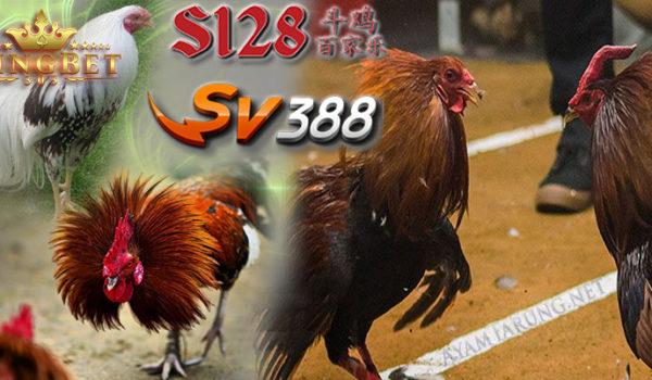 S1288 Live